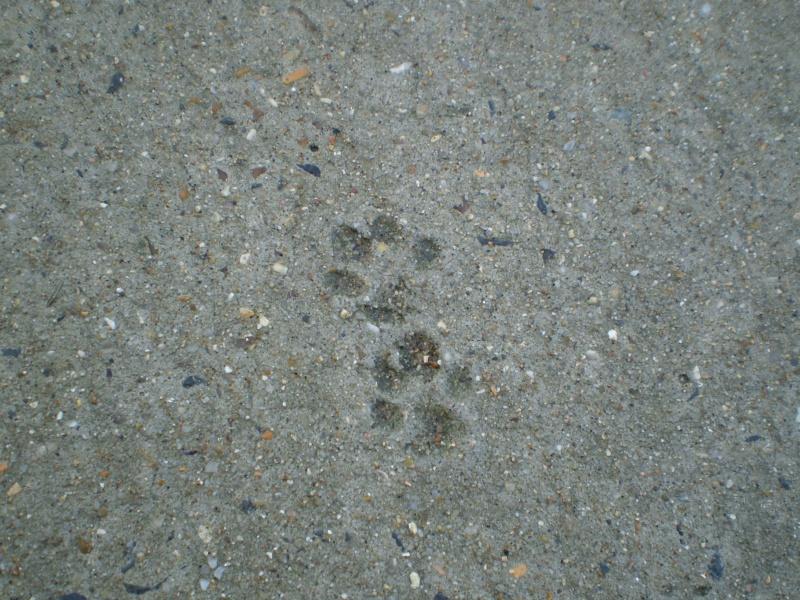 http://i77.servimg.com/u/f77/09/02/08/06/20111010.jpg