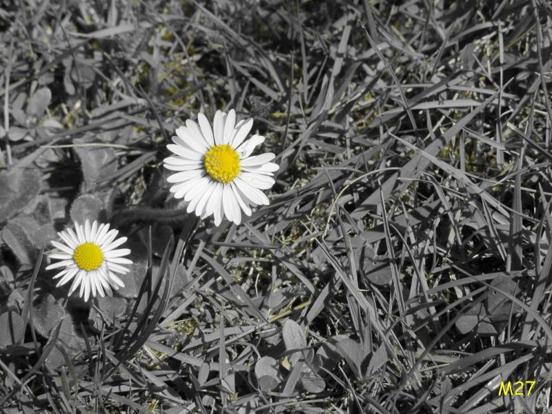 http://i77.servimg.com/u/f77/09/02/08/06/fleurn10.jpg