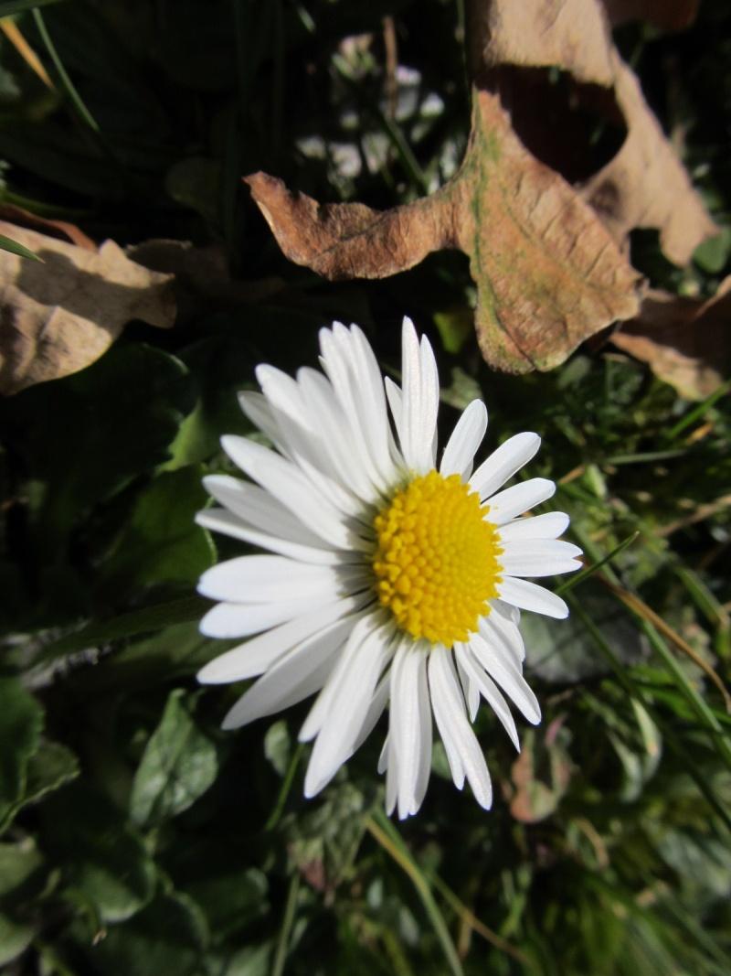 http://i77.servimg.com/u/f77/09/02/08/06/img_2418.jpg