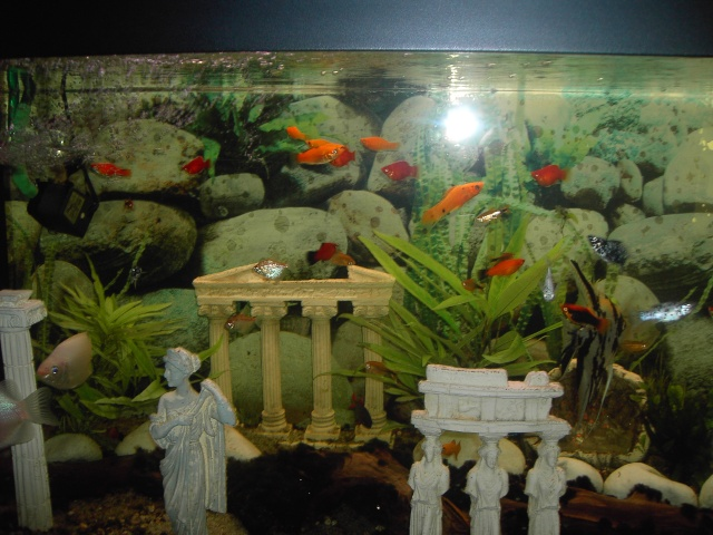 Vend aquarium 500 littres poissons for Vend aquarium
