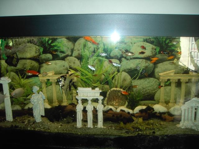 vend aquarium 500 littres poissons. Black Bedroom Furniture Sets. Home Design Ideas