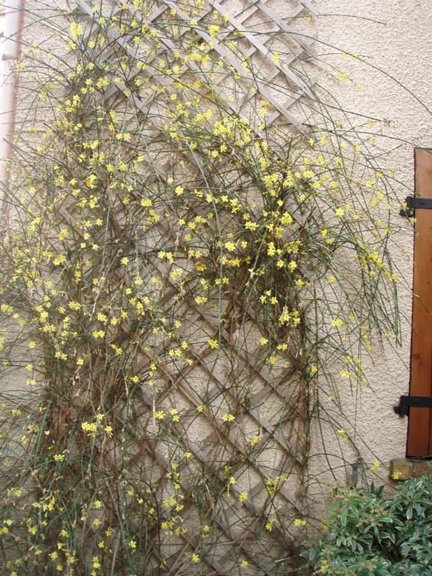 plantes grimpantes florif res sur palissade orient e l 39 ouest d coration du jardin forum. Black Bedroom Furniture Sets. Home Design Ideas