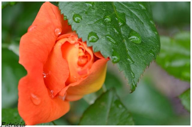dsc_0310 dans fleurs