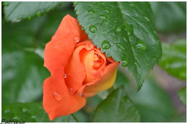dsc_0312 dans fleurs