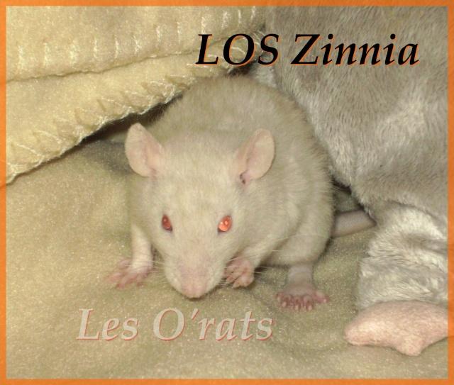 zinnia14.jpg