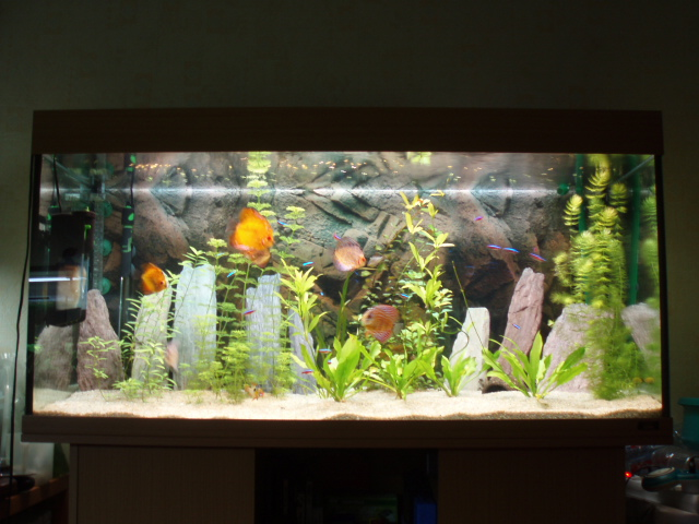 forum message quoi prendre comme nouvel aquarium 120cm. Black Bedroom Furniture Sets. Home Design Ideas
