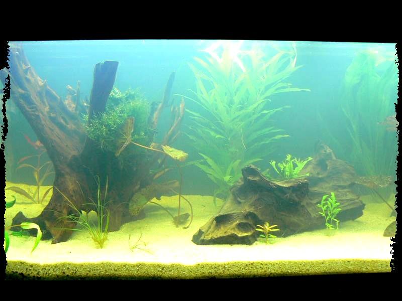 Le 450 litres et autre bacs de kej page 2 for Bac a poisson 500l