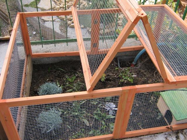 Il mio terrario con le mie tartarughe pagina 2 for Terrario per tartarughe di terra giardino