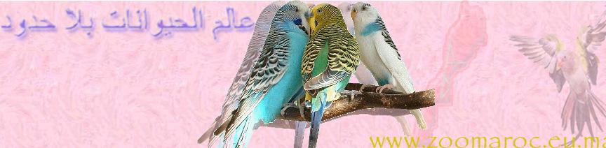 °¨¨°º°¨¨°(*)(_.·´¯`·«¤°  عالم الحيوانات بلا حدود  °¤»·´¯`·._)(*)°¨¨°º°¨¨°