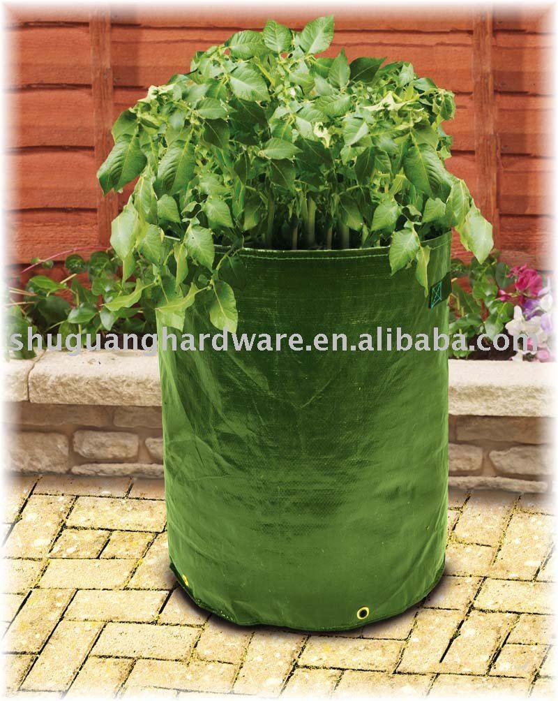 Plants de patates page 3 - Date plantation pomme de terre ...