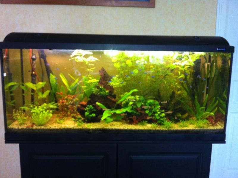 aquarium 240 litres. Black Bedroom Furniture Sets. Home Design Ideas