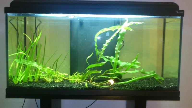 D butant achat pour compl t mon 96 litres for Achat aquarium complet